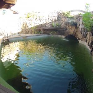 Natural-Swimming-Pool