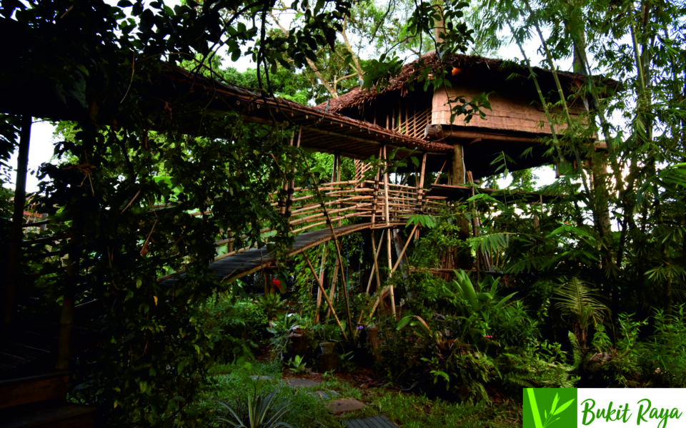 Treehouse_1